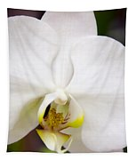 Simply Pure Orchid Tapestry