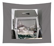 Sleeping In The Dog House Tapestry