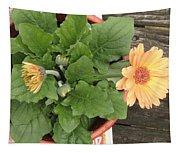 Smiling Orange Zerbera Flower Tapestry
