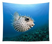 Spotted Porcupinefish Tapestry