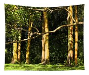 Stand Of Rainbow Eucalyptus Trees Tapestry