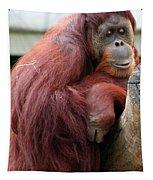 Sumatran Orangutan Tapestry