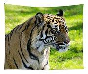 Sumatran Tiger Portrait  Tapestry