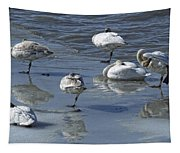 Swans On The Ice Along The Tagish Tapestry