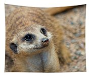 Sweet Meerkat Face Tapestry