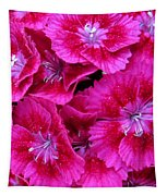 Sweet William Tapestry