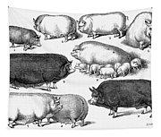 Swine, 1876 Tapestry