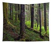Temperate Rain Forest, Carmanah-walbran Tapestry