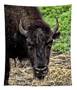 The Bison Stare Tapestry
