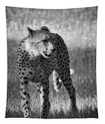 The Cheetah  Tapestry