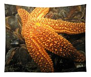 The Great Starfish Tapestry