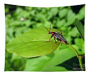 The Rednecked Bug On The Leaf Tapestry