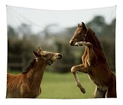 Thoroughbred Foals Playing Tapestry