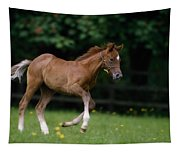 Thoroughbred Horse, National Stud Tapestry