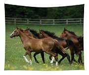 Thoroughbred Horses, Ireland Tapestry