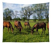 Thoroughbred Horses, Yearlings, Ireland Tapestry