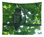 Three Barred Owls Tapestry