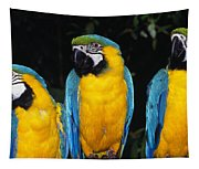 Three Parrots Tapestry