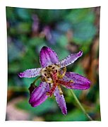 Toad Lilly 1 Tapestry