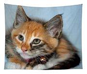Tortoiseshell Kitten Tapestry