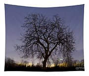 Tree At Night With Stars Trails Tapestry