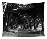 Tree Canopy Promenade Road Drive . 7d9977 . Black And White Tapestry