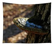 Tree Shelf Snow Sprinkled Fungus Tapestry