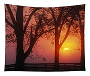 Trees In The Sunrise Tapestry
