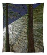 Trees Sky Shadow Tapestry
