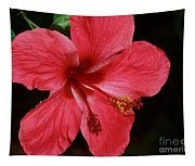 Tropical Beauty Of Florida Tapestry