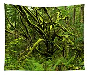 Twisted Rain Forest Tapestry