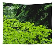 Umbrella Of Trees In Forest Tapestry