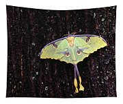 Unique Butterfly Resting On Tree Bark Tapestry
