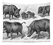 Varieties Of Swine Tapestry