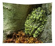 Vietnamese Mossy Frog Tapestry