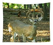 Vocal 10 Point 9544 4378 Tapestry