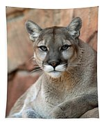 Watching Cougar Tapestry