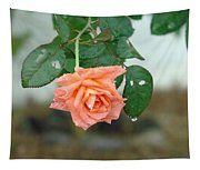 Water Dripping From A Peach Rose After Rain Tapestry