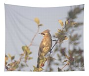 Wax Wing In Sunshine  Tapestry