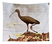 White-faced Ibis Tapestry