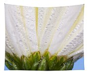 White Flower Head With Dew Tapestry