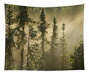 White Spruce In Mist At Sunrise Tapestry