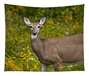 White Tail Early Autumn Tapestry