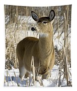 White-tailed Deer In A Snow-covered Tapestry