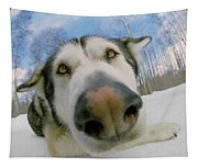 Wide Angle Dog Tapestry