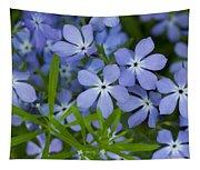 Wild Blue Phlox Flower 1 A Tapestry