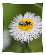 Wildflower Named Robin's Plantain Tapestry