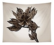 Winter Dormant Rose Of Sharon - S Tapestry