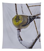 Yellow Finch Cold Snow Tapestry