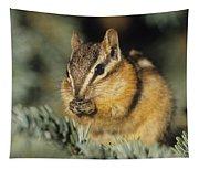 Yellow Pine Chipmunk, Kananaskis Tapestry